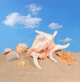 贝壳和海星在海滩沙子 库存图片