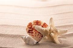 贝壳和海星在海滩沙子 免版税库存照片