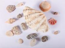 壳和温泉热的石头 库存图片