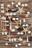 壳和漂流木头 免版税库存图片