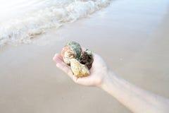 贝壳和珊瑚在右手,礼物从海洋 图库摄影
