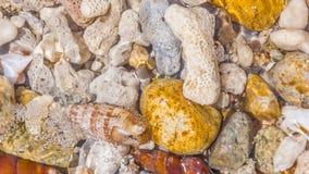 壳和珊瑚背景  库存照片
