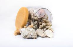 壳和珊瑚遗骸在瓶子 库存图片