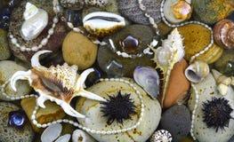 壳和石头在水下 免版税库存图片