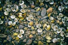 壳和石头的图象在地板上 免版税库存照片