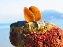 壳和石头 库存图片