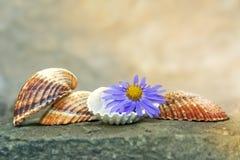 贝壳和花 免版税库存图片
