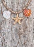 贝壳和绳索在老木头 海洋背景 免版税库存图片