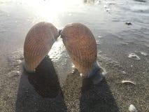 壳喜欢天使的翼 免版税图库摄影