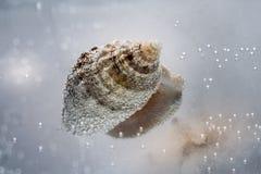 壳在与泡影特写镜头的水中在轻的背景 免版税库存照片