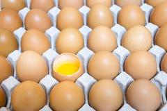壳在包裹,卵黄质的框鸡蛋 库存图片