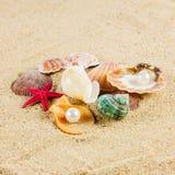 贝壳在沙子海滩的und海星 免版税库存图片