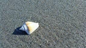 壳在海岸线 免版税库存图片