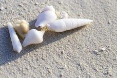 壳在海滨的白色沙子说谎 免版税图库摄影
