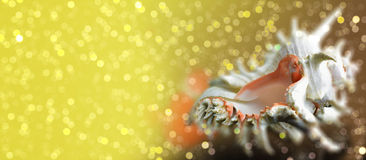 贝壳在闪耀的bokeh背景的Chicoreus ramosus 免版税图库摄影