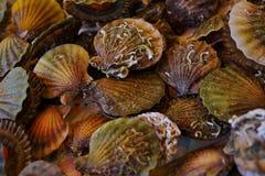 壳在鱼市上在伊斯坦布尔,土耳其 库存照片