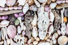贝壳墙壁  库存图片