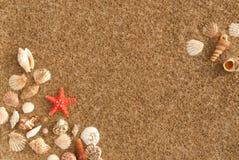 贝壳框架与沙子的作为背景 免版税库存图片