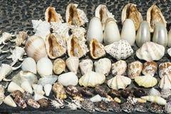 贝壳汇集拍卖在立场在库塔海滩,巴厘岛, Indonesie 图库摄影