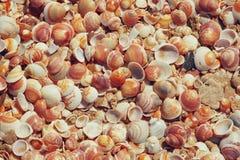 壳汇集顶视图在沙子的 库存照片