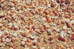 壳汇集顶视图在沙子的 库存图片