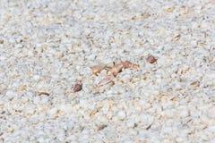 壳海滩在西澳州 免版税库存照片