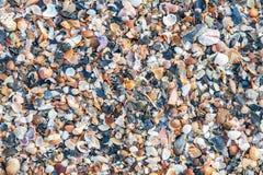 壳海滩 免版税图库摄影