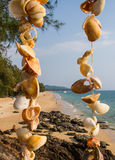 壳海滩 免版税库存图片