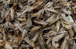 壳玉米 免版税库存图片