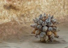 贝壳球在阳光下 虚构的沙子和云彩 免版税库存照片