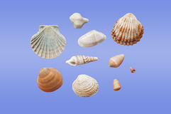 贝壳的不同的类型 免版税库存照片