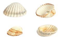 壳的分类 免版税库存图片
