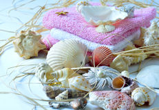 贝壳的收集 图库摄影