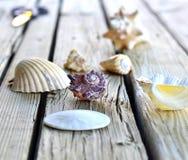 贝壳的收集 免版税库存照片