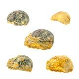 贝壳的汇集在白色背景的 免版税库存照片