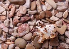 贝壳背景-美丽的贝壳宏观射击  库存图片