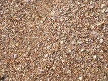 贝壳背景 许多海壳在一个海滩夏天 小和沙子假日,背景 库存图片
