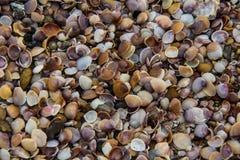 贝壳背景 库存图片