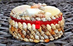 贝壳胸口柳条纹理背景 免版税库存照片