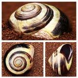 壳蜗牛 库存图片