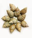 壳蜗牛 免版税库存图片