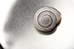壳蜗牛 免版税库存照片