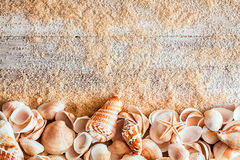 贝壳边界在含沙木板的 免版税库存照片