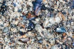 贝壳铺沙在水下 免版税库存图片