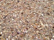 壳,海边 免版税库存图片