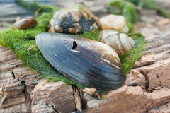壳,蜗牛,岩石,在木头的河杂草 库存图片