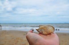 贝壳, Rayong -泰国 免版税库存图片