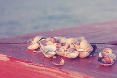 贝壳 蓝色海洋软的波浪沙滩的 背景 免版税库存照片