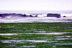处于低潮中在海湾,在海岸海藻和海甘蓝被投掷,波浪 免版税库存照片