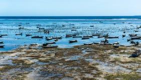 处于低潮中种田在努沙Lembongan海岛上的海草 库存照片